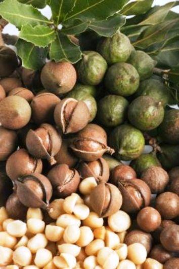 230 melhores imagens de frutas y semillas no pinterest for Semillas de frutas y verduras