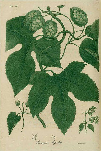 Botany Textbook Pdf