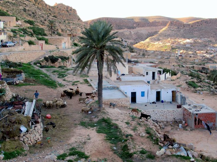 The stone and cave houses of the Berber village of Toujane, Tunisia, are built along the sides of a gorge.