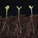 Cómo favorecer el desarrollo de las raíces de las plantas para que éstas sean más fuertes | #Huerto urbano - Huerto ecológico ecoagricultor.com