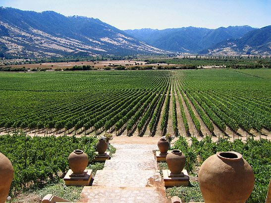 Colchagua Valley, Libertador Bernardo O'Higgins Region, Chile.