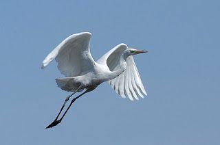 animali e natura : AIRONE