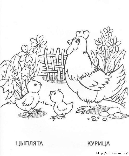 Петух курица цыпленок раскраска