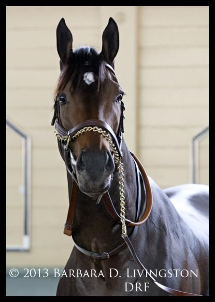 133 best Horse Racing images on Pinterest | Horse racing, Race ...