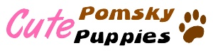 Article about the history of pomsky puppies the beautiful and playful dog pomsky and where to buy pomsky dog.    via : http://www.cutepomskypuppies.com/pomsky/a-short-history-of-pomsky/