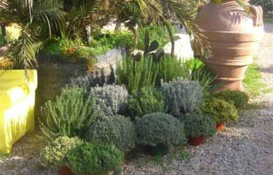 Le piante aromatiche sono preziose in cucina per arricchire di profumo e sapore le ricette e anche per decorare l'ambiente con i loro colori.
