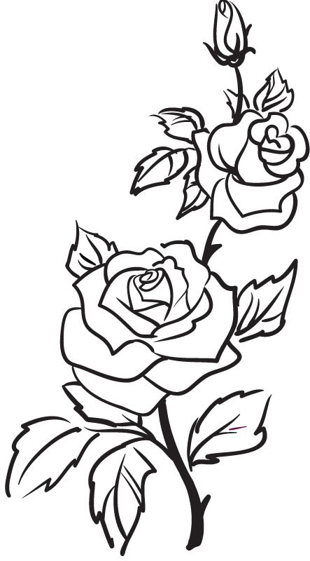 Line Drawing Of Rose Plant : Best rose outline ideas on pinterest simple
