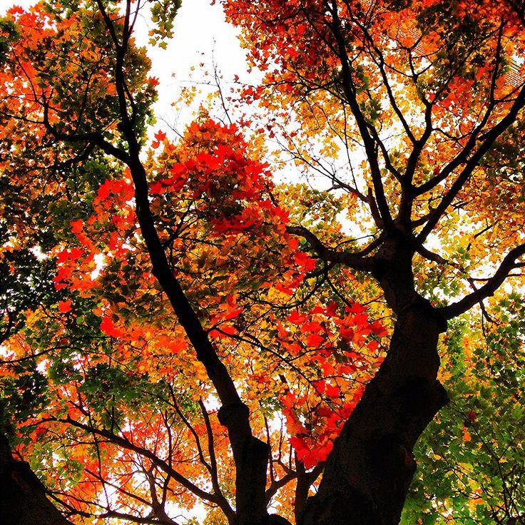 Fall   by damaris.reda