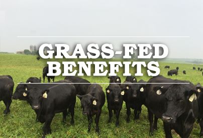 2XL Premium Angus   2XL Premium Angus   To Excel Means Superior Grass Fed Beef