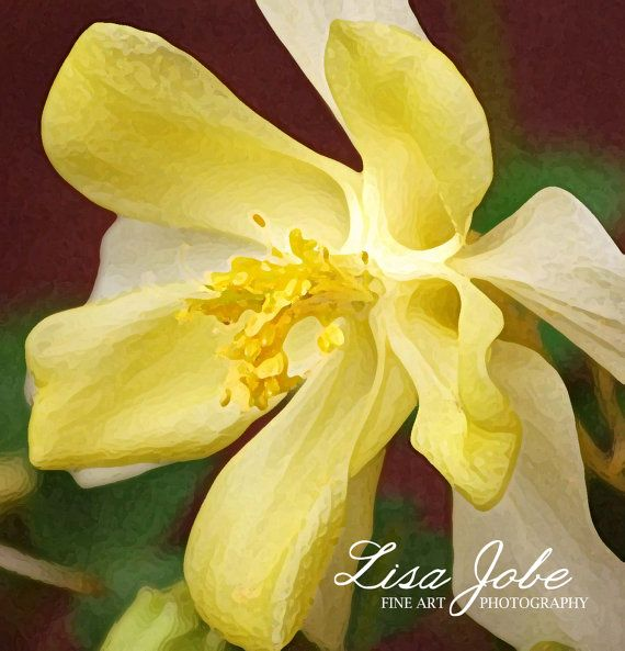1000 Images About Columbine On Pinterest: 1000+ Images About
