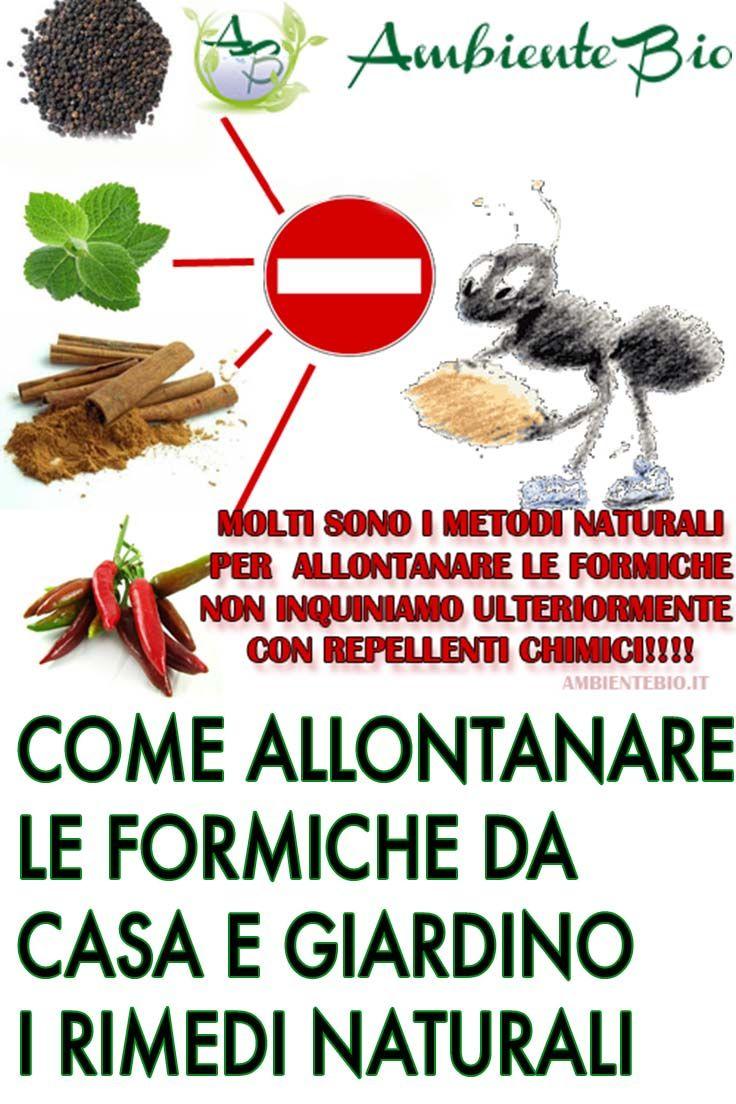 Prodotti Efficaci Contro Le Formiche rimedi naturali efficaci su come allontanare le formiche da