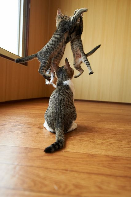 CHEST BUMP! by rampx, via Flickr