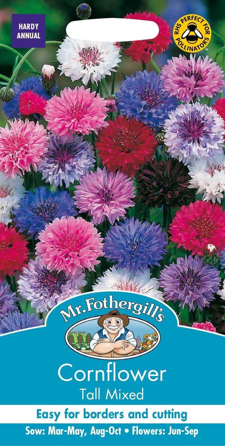 Mr Fothergills Pictorial Packet Flower Cornflower