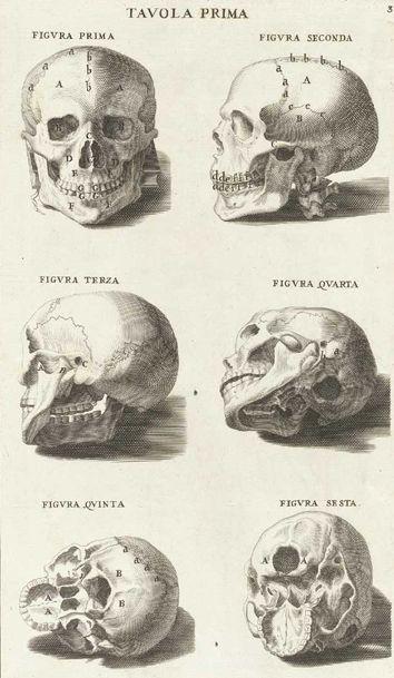 Tavola Prima. Bernardino Genga. Anatomia per uso et intelligenza del disegno ricercata non solo su gl'ossi, e muscoli del corpo humano... (https://pinterest.com/pin/287386019949079349/).