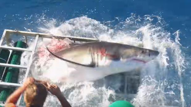 YouTube: Investigan incidente en que tiburón blanco fue herido