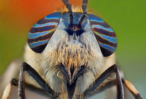 12 fascinante portrete de insecte
