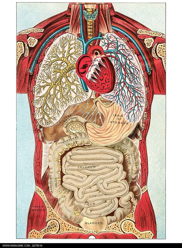 90 best Real Anatomy. images on Pinterest | Anatomía humana, Escuela ...
