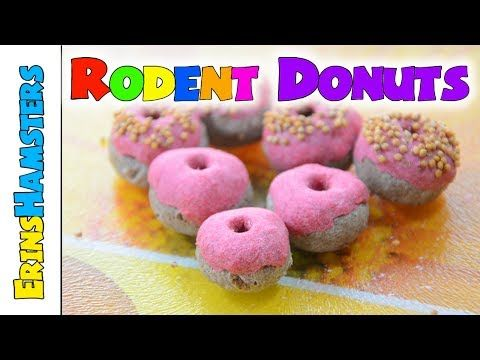 HAMSTER DONUTS | Rodent Treats - YouTube