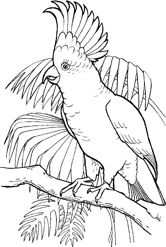 free coloring pages tropical birds-#13