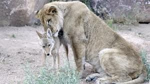 odd animal couples - Google Search