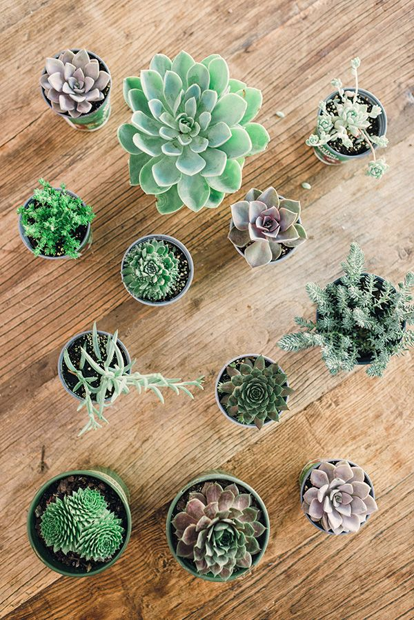 DIY succulent arrangements are perfect for wedding centerpiece flowers, and are super easy to plant