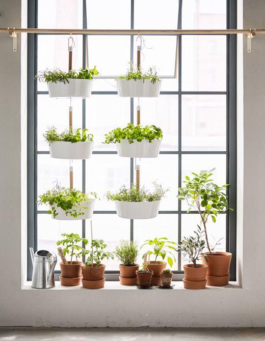 Du träumst von einem Garten, hast aber nur eine kleine Wohnung? Dann erweitere deine Fensterbank nach oben, z. B. wie hier mit BITTERGURKA Ampel in Weiß.