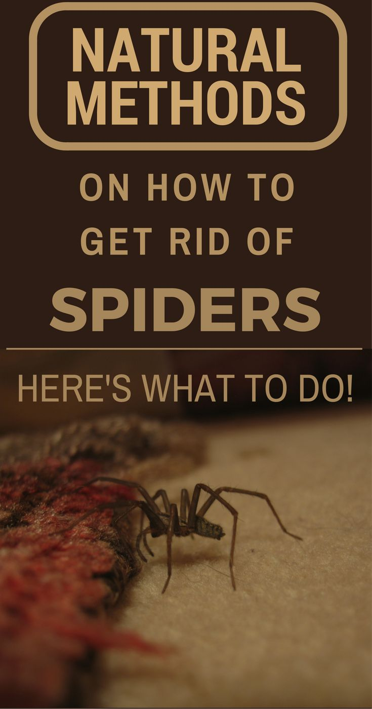 how to get rid of spiders in your house naturally