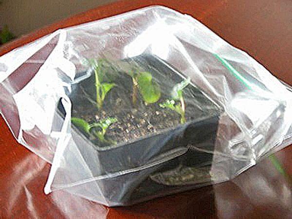 Keeping Plant Cuttings Moist