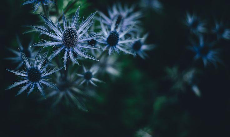 Photo By Annie Spratt | Unsplash