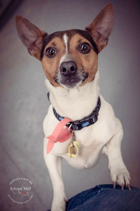 Good morning ... This is little Texas who is currently at Renbury Farm Animal Shelter. He's a lovely little boy with great manners and very, very sweet. Available to adopt now should his family not come. Renbury is open all long weekend from 9am-4pm \u003