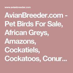 AvianBreeder.com - Pet Birds For Sale, African Greys, Amazons, Cockatiels, Cockatoos, Conures, Macaws, Parrots