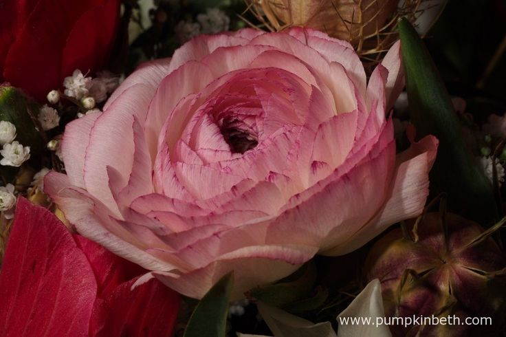 This pretty pink Ranunculus was grown in Great Britain. This lovely bloom was included in an arrangement from The Great British Florist, which arrived in January 2017.