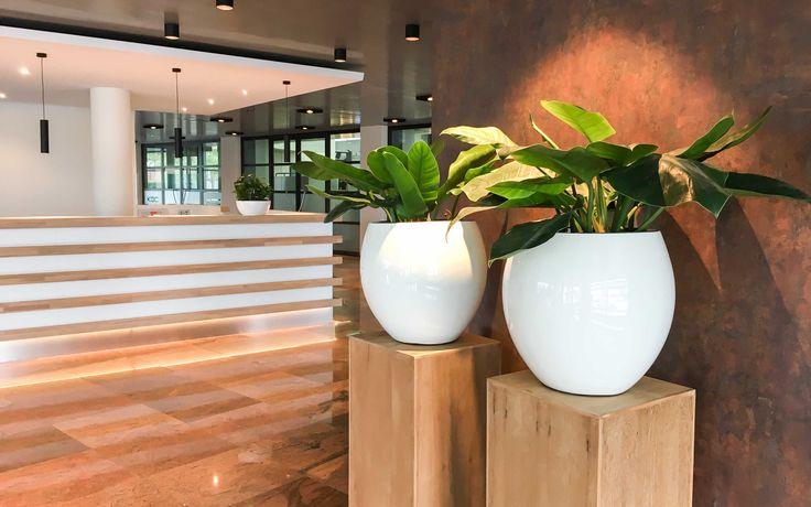 Philodendron op houten zuil in Utrecht  Hydrocultuur | Interieurbeplanting | Onderhoud | Planten | Interieur | Inrichting | Bedrijf | Kantoor | Kantoorplanten