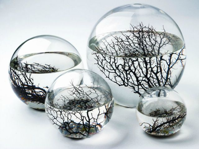 The EcoSphere Closed Aquatic Ecosystem is a complete ecosystem with sea water, algae, bacteria and live marine shrimp, all enclosed in a sealed glass sphere. All you need to do is to place the EcoSphere in sunlight. Unlike an aquarium, you do not need to feed the shrimp or change the water. The ecosystem is self contained and self sustaining.