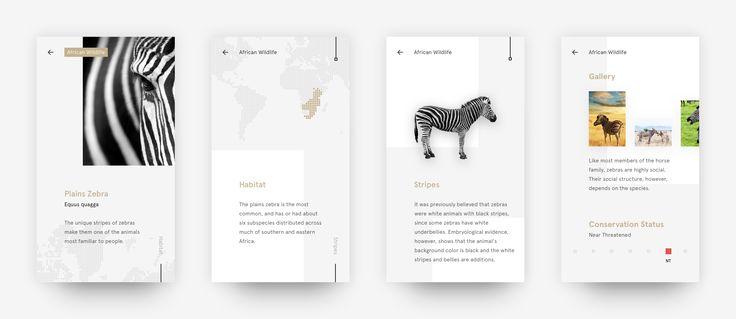 Zebra facts african wildlife