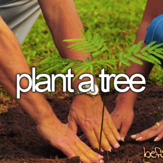 since we have lived in our current home, we have planted pine trees, maple trees,  replanted a walnut tree that started from shell a bird dropped, a couple of lilacs, plum, and various bushes around our small quarter acre property.