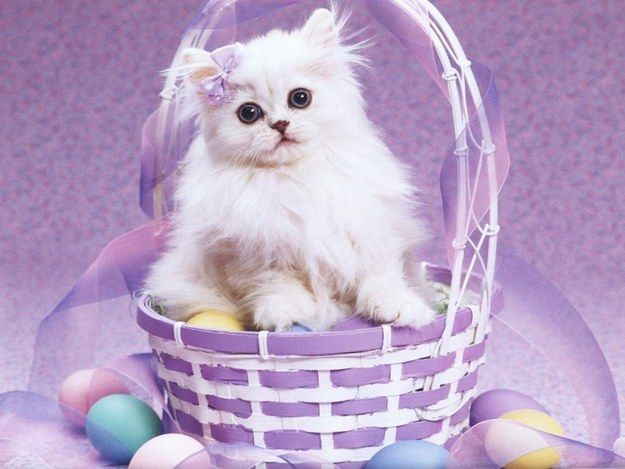 Community Post: Happy Easter Caturday!