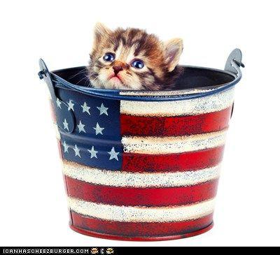 4th of July KittenCat, 4Thofjuly, Best Friends, Fourth Of July, 4Th Of July, Patriots, Kitty, Happy 4Th, Animal