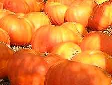 Winemaking Recipe for Pumpkin Wine, How To Make Pumpkin Wine: Wine Making Guides