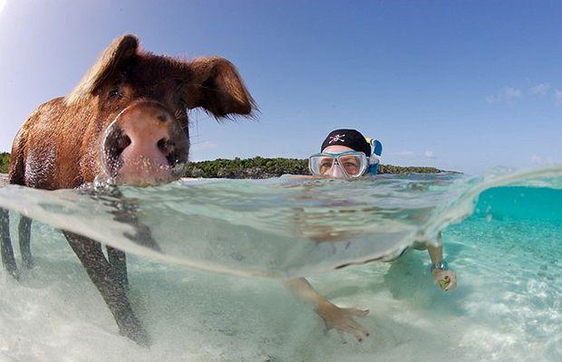 Big Major Cay, Bahamas - Ilha dos Porcos;