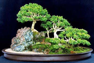 saikei...a small landscape as opposed to a single perfect tree in bonsai