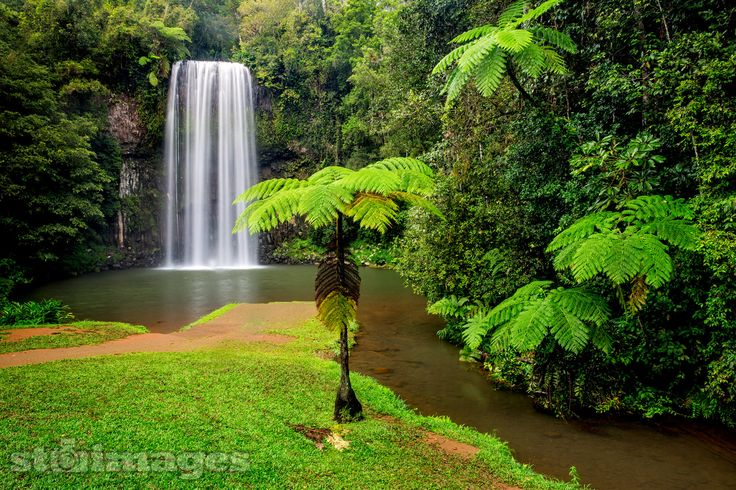 A beautiful and popular waterfall in Northern Queensland on the amazing Atherton Tablelands