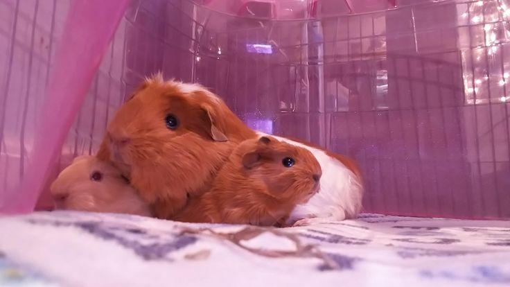 Mama pig got her babies this morning http://ift.tt/2smWrqU