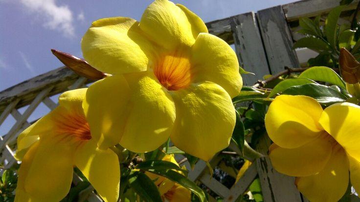 En amarillo...