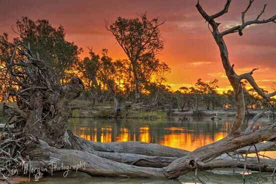 The Murray River, from the Victorian side, Looking towards NSW, Australia