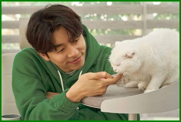 Nama Kucing Peliharaan Artis Korea Di 2020 Kucing Hewan Peliharaan Hewan