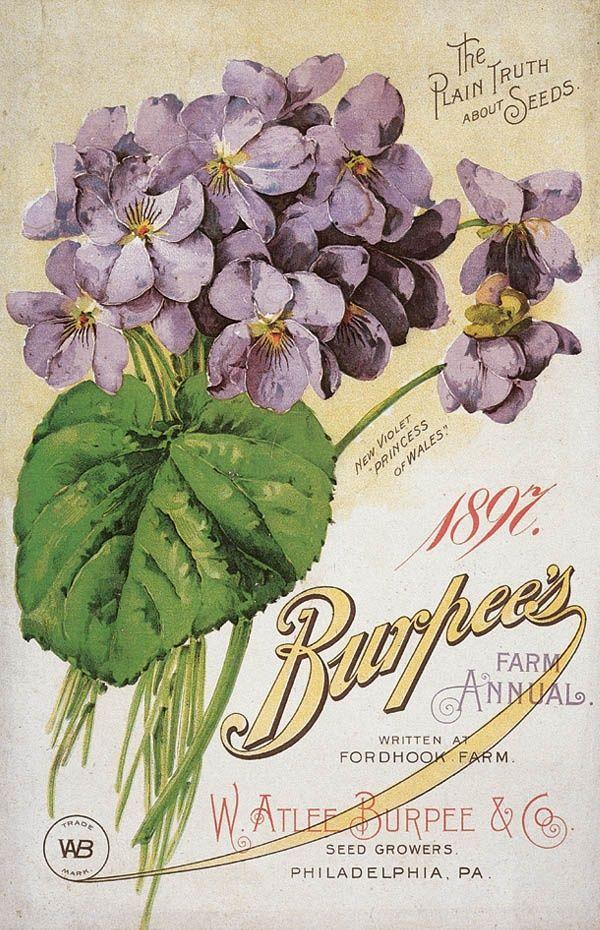 1897 Берпи Plain Truth О семенах {} старинные.  Я люблю старинные пакеты семян и каталоги-красивые художественные работы!