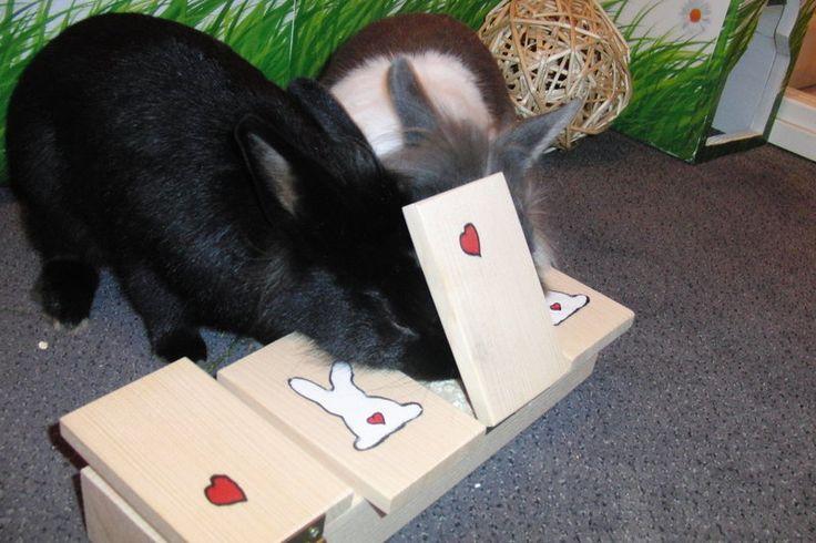 Die besten ideen zu meerschweinchen spielzeug auf