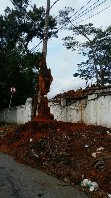 Poste/ árvore - Lapa / São Paulo - BR 04/2017