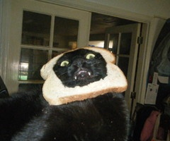 My face every morning.: Cat Breads, Funny Cat, Animal Humor, Breads Cat, Cat Costumes, Funny Stuff, Funny Animal, Cat In Breads, Black Cat